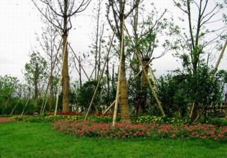 园林绿化服务